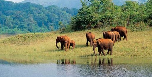 Important Tourist Places in Munnar
